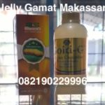 Jelly Gamat Makassar